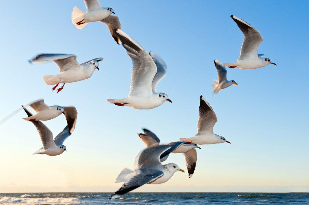 gulls-370012_1280